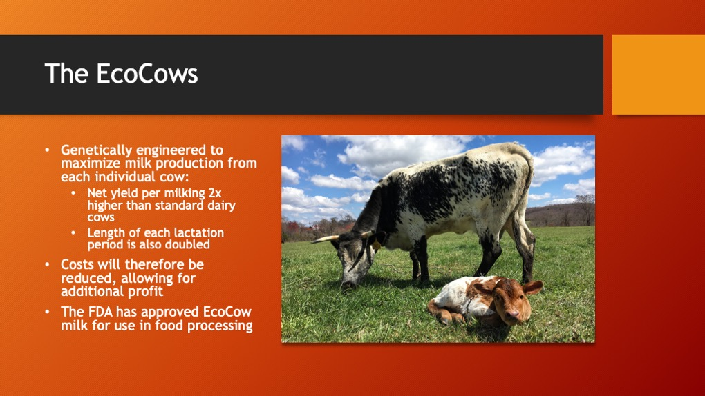 The EcoCows. Genetically engineered to maximize milk production from each individual cow. Costs will therefore be reduced, allowing for additional profit. The FDA has approved EcoCow milk for use in food processing.