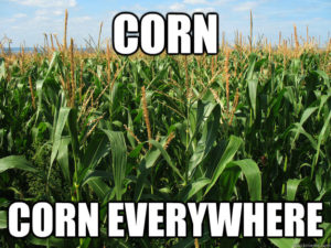 Corn. Corn Everywhere.