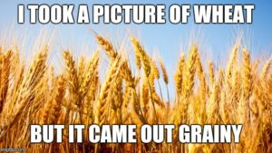 I took a picture of wheat but it came out grainy